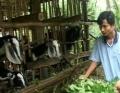 Vĩnh Long đầu tư gần 200 tỷ đồng cho các xã có đông đồng bào Khmer