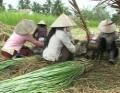 Vĩnh Long chú trọng phát triển làng nghề
