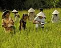 Trà Ôn có 424 hộ Khmer thuộc diện hỗ trợ theo Quyết định 74