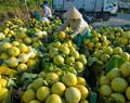 Vĩnh Long đẩy mạnh liên kết, hợp tác trong chuỗi sản xuất nông nghiệp