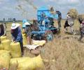 Vấn Đề Hôm Nay Kỳ 9 – Bình Ổn Giá Lúa Cho Nông Dân (Phần 2)