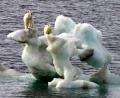 (THVL) Không nên xem khủng hoảng tài chính là rào cản giải quyết tình trạng biến đổi khí hậu