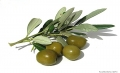 (THVL) Kỹ thuật canh tác mới cho cây ô-liu ở Israel