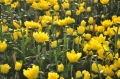 Tìm lại mùa xuân…