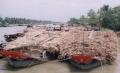Đồng bằng sông Cửu Long: ồ ạt trồng mía