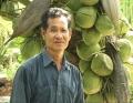 Ông Phạm Văn Châu trồng dừa xiêm dứa
