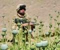 (THVL) Nga kêu gọi tạo ra một liên minh chống ma túy