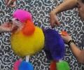 (THVL) Nhuộm lông cho thú cưng ở Bắc Kinh
