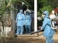 Muỗi lạ xuất hiện tại Kiên Giang