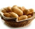 (THVL) Khoai tây: nguồn năng lượng đầy tiềm năng